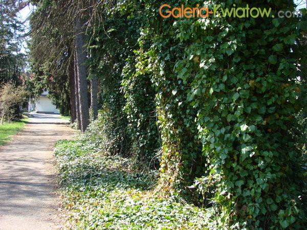 Alejka w ogrodzie botanicznym - Powsin