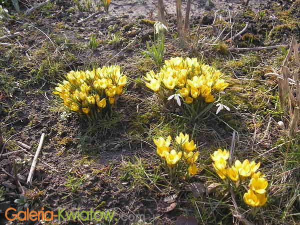 Ogród wiosenny
