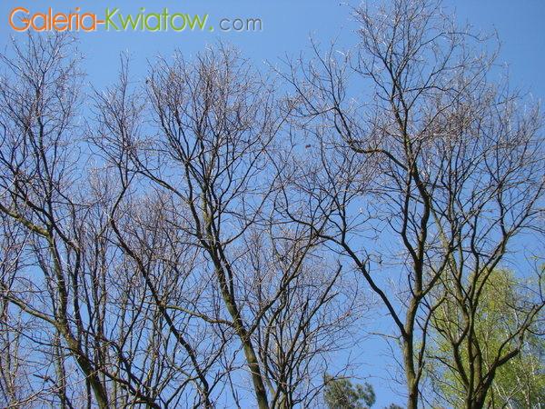 Konary drzew