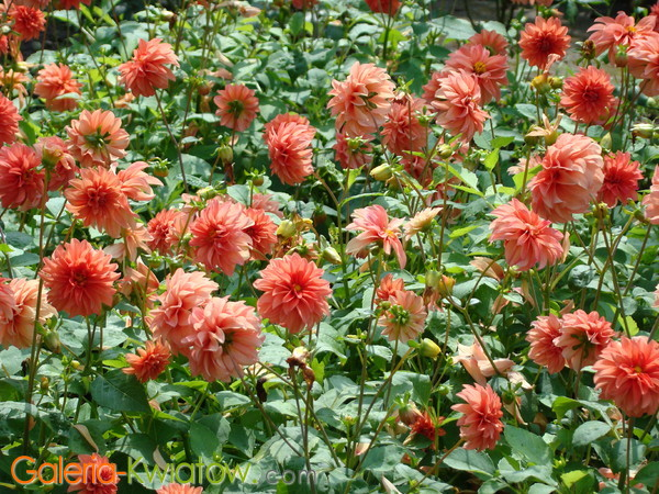 Kwiaty na rabacie