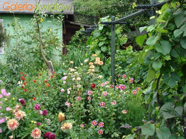 Pregola ogrodowa
