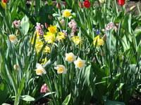 Ogród z roślinami cebulowymi