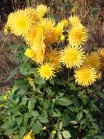 Kwiaty jesienne