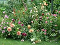 Rabata w ogrodzie wiejskim